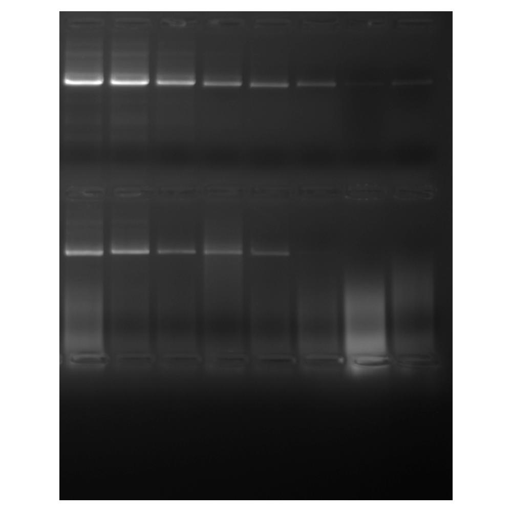 PCRBIO HiFi Polymerase Fig.1