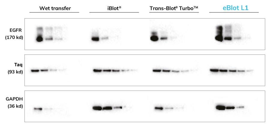 eBlot - comparisation