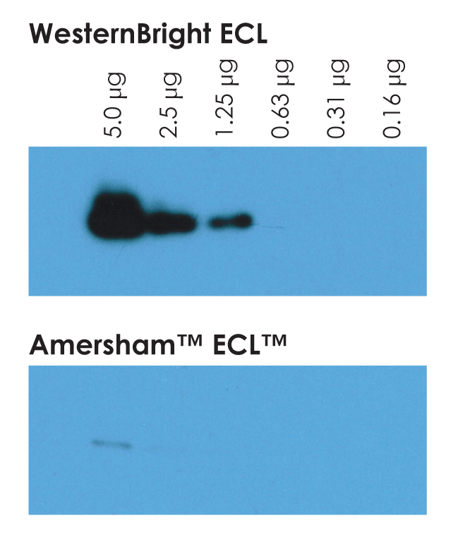 WesternBright ECL HRP Substrate