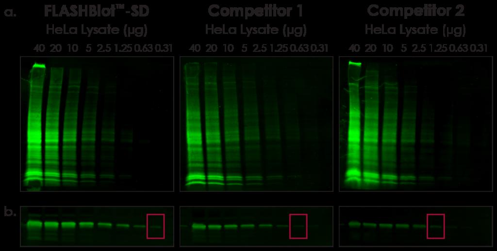 FLASHBlot-SD Transfer Buffer