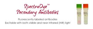 SpectraDye Secondary Antibodies